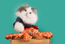 Greedy Cat Does Not Want To Share The Crab