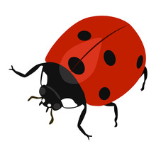 Ladybird Vector Icon On A White Background. Insect Illustration Isolated On White. Beetle Realistic Style Design, Designed For Web And App. Eps 10.