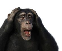 Shocked Chimp