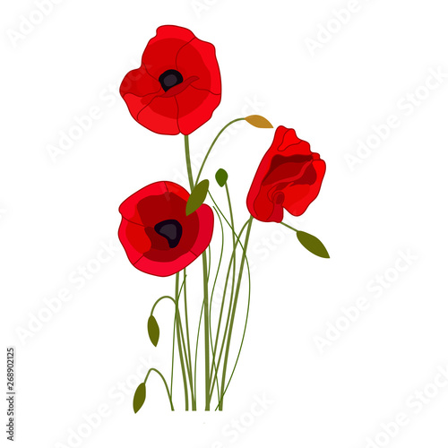 Canvas Prints Poppy Poppies vector icon on a white background. Flower illustration isolated on white. Wildflowers realistic style design, designed for web and app. Eps 10.