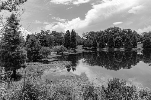 Poster Gris Black and white landscape of the wetlands in Florida