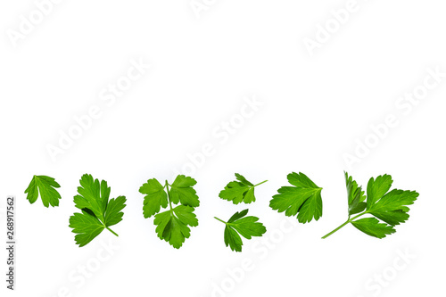 Fototapeta chopped parsley leaves isolated on white background with copy space above