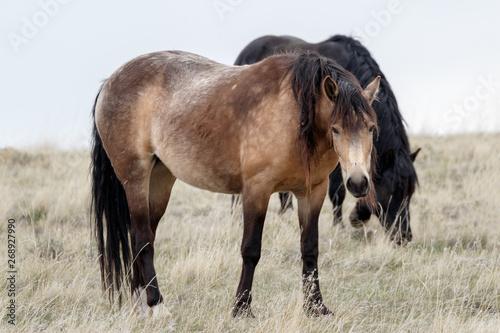 Valokuva  Wild horse