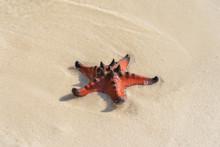 Cute Orange Starfish On The Wh...