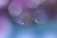 Beautiful Blue Nature Background.Dandelion Flower.Macro Photography.Artistic Wallpaper.Closeup View.Water Drops.Love,romance,romantic.Colorful Floral Art Design.Abstract Flowers.Amazing Photo.Natural