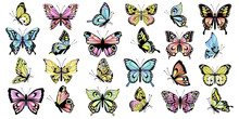 Set Colored Butterflies