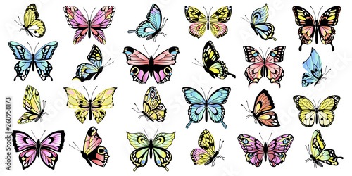 Fototapeta  set colored butterflies