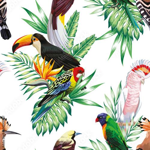 papuga-maccaw-i-tukan-na-galezi