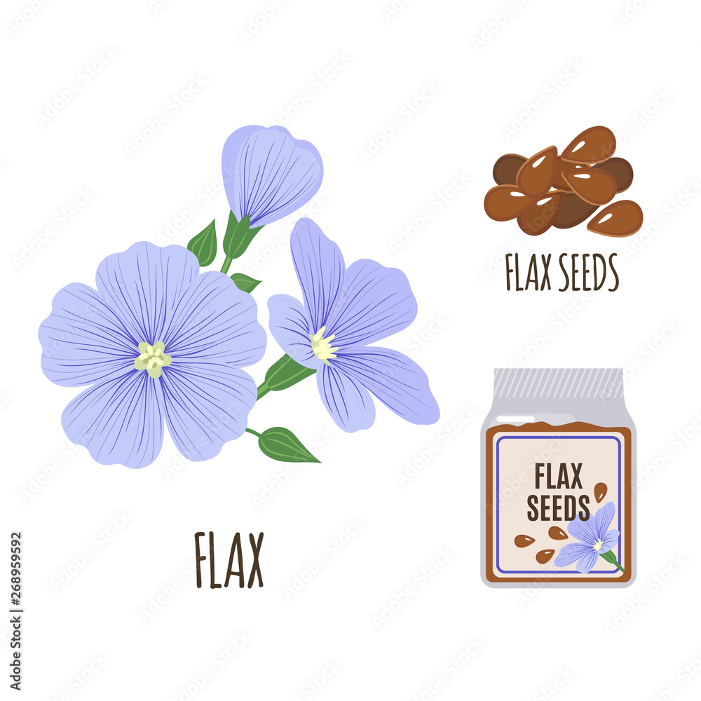 Fototapety, obrazy: Flax set in flat style isolated on white.