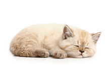 Cute Sleeping Kitten On White ...