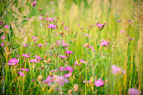 Foto op Plexiglas Weide, Moeras Pink wildflowers in green grass.