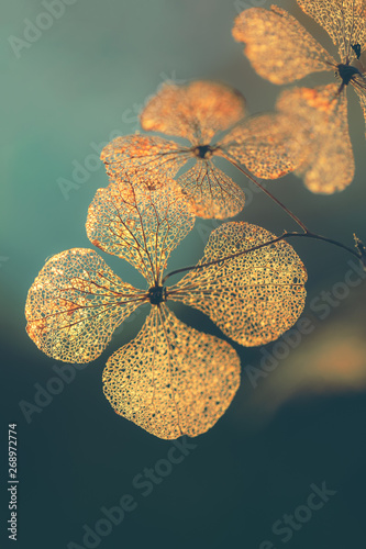 Foto Selective focus on petal of dry hydrangea flower with nature green background