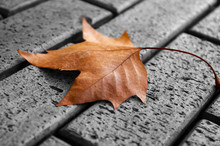 Yellow Leaf Lying On The Pavement