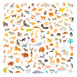 Mammals of the world. Animals and birds cartoon style, mammals icon. Animals vector. Extra big animals set. Vector illustration, isolated on a white background