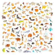 Mammals Of The World. Animals ...