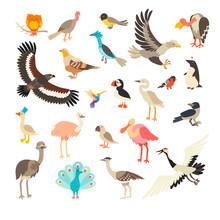 Birds Collection Vector Set. C...