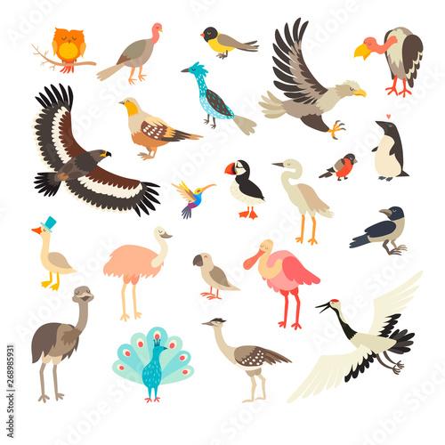 Birds collection vector set Canvas Print