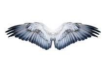 Pair Of Hawk Wings Isolated On White. Clipping Path Included.