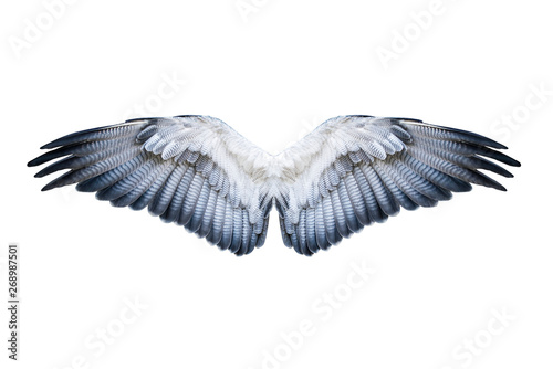 Pair of hawk wings isolated on white. Clipping path included. - 268987501