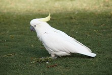 Beautiful Big White Parrot Is ...