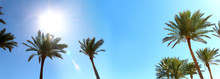 Palm Trees Against The Blue Sky And Bright Sun.