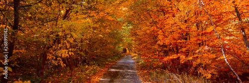 Foto auf AluDibond Ziegel Banner 3:1. Autumn forest with footpath leading into the scene. Autumn background. Copy space. Soft focus