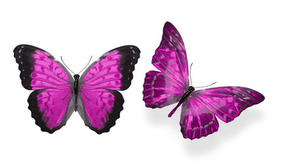 beautiful two pink butterflies isolated on white background