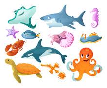 Sea And River Underwater Animals. Different Sea Animals Fish