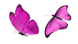Fototapeta Motyle - beautiful two pink butterflies isolated on white background
