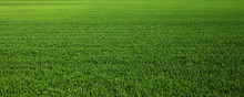 Lush Green Grass Meadow Backgr...