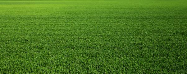 Bujna zelena trava livada pozadina