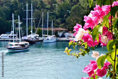 Vászonkép Beautiful bougainvillaea in pink and white colors with boats on the backgrtound