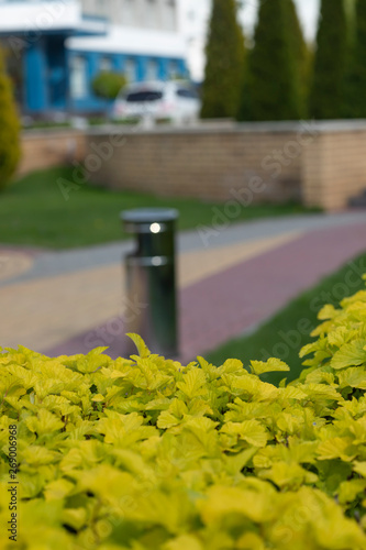 Aluminium Prints Garden Neatly trimmed shrubs with young light green foliage in the city park. Selective focus, blur background.