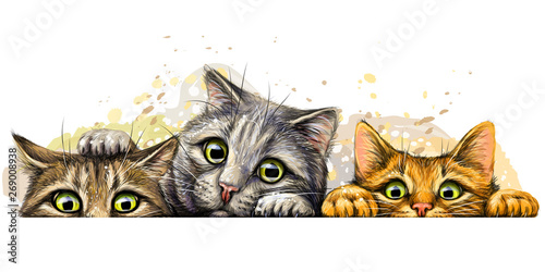 Wall sticker. Graphic, colored hand-drawn sketch with splashes of watercolor depicting three cute cats on a horizontal surface.