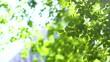木漏れ日の中で風に揺れる新緑