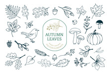 Vector Set With Various Autumn/fall Themed Elements Like Leaves, Mushrooms, Pumpkins, Nuts And Flowers.
