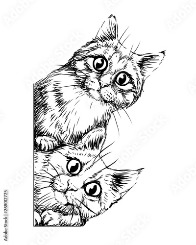 Fototapeta Wall sticker. Graphic, black and white hand-drawn sketch depicting two cute cats looking around the corner. obraz