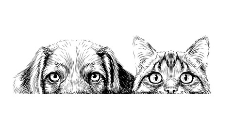 Panel Szklany Pies Wall sticker. Graphic, artistic, sketch drawing of a cat and a dog looking at a table on a white background.