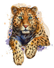 Color, Graphic, Artistic Portrait Of A Leopard In A Picturesque Style On A White Background With Splashes Of Watercolor.