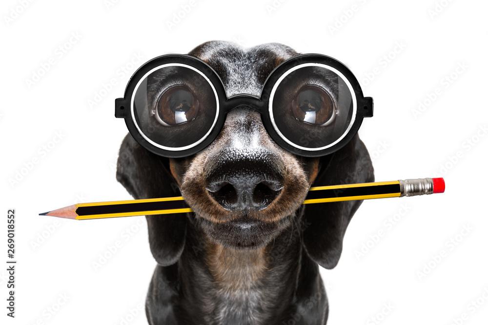 Fototapety, obrazy: office worker boss dog