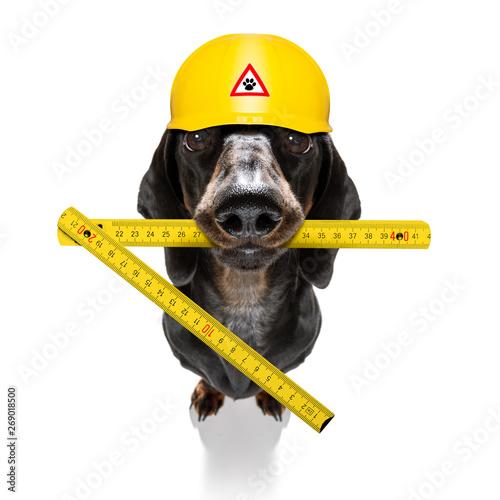 Fotobehang Crazy dog handyman hammer dog with helmet