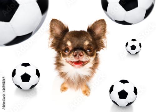 Fotobehang Crazy dog soccer football dog