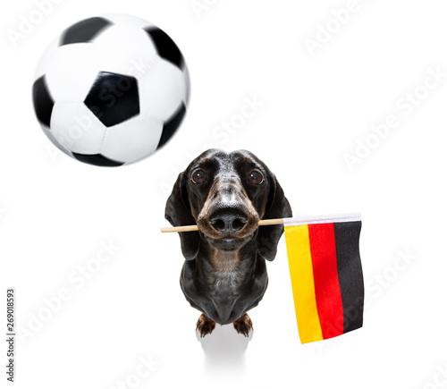 Cadres-photo bureau Chien de Crazy soccer football dog