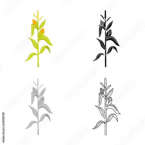 Isolated object of corn and stalk logo Obraz na płótnie