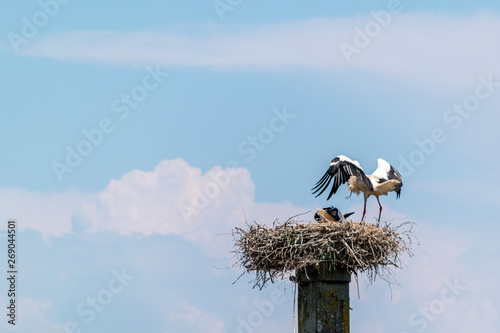 cigüeña sobre nido alimentando a su cria en lo alto de una columna Canvas Print