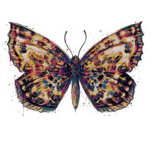 Hand Painted Watercolour Moth / Butterfly With Paint Splatter No. 10c