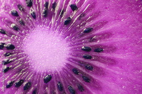 Cross Section of Kiwi Fruit in Vibrant Purple Color for Background or Banner - 269049545