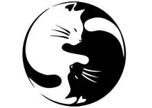 Gatos YIN-YANG