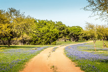 A Beautiful Wide Angle View Of A Texas Meadow Blanketed With The Famous Texas Blue Bonnets (Lupinus Texensis) And A Dirt Road