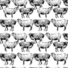 Seamless Pattern With Sheep. W...